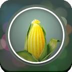 玉米直播app免费下载_最新版玉米直播apk下载_v1.0.0.5TV版