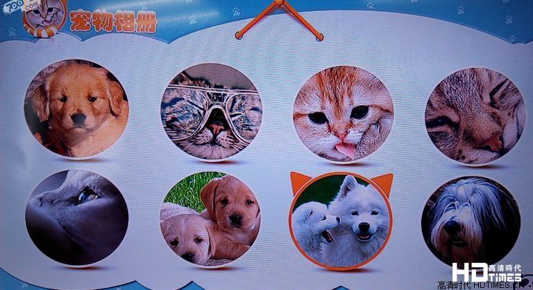 宠物相册整合了多张宠物的相册