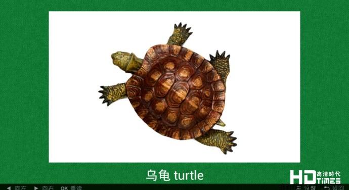 看图识动物tv版乌龟
